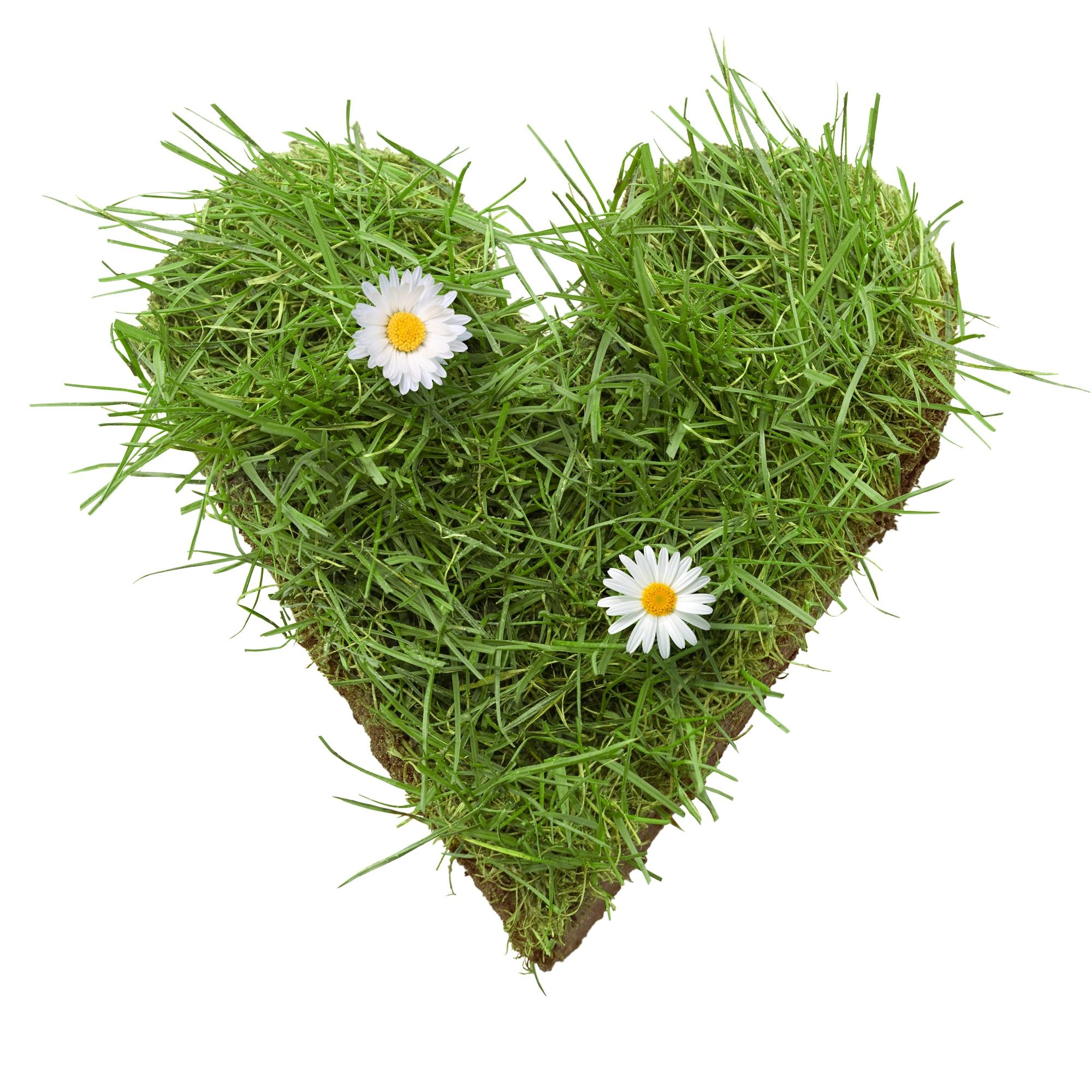 gras hart | Hart van gras - Noord-Hollandse graskaas